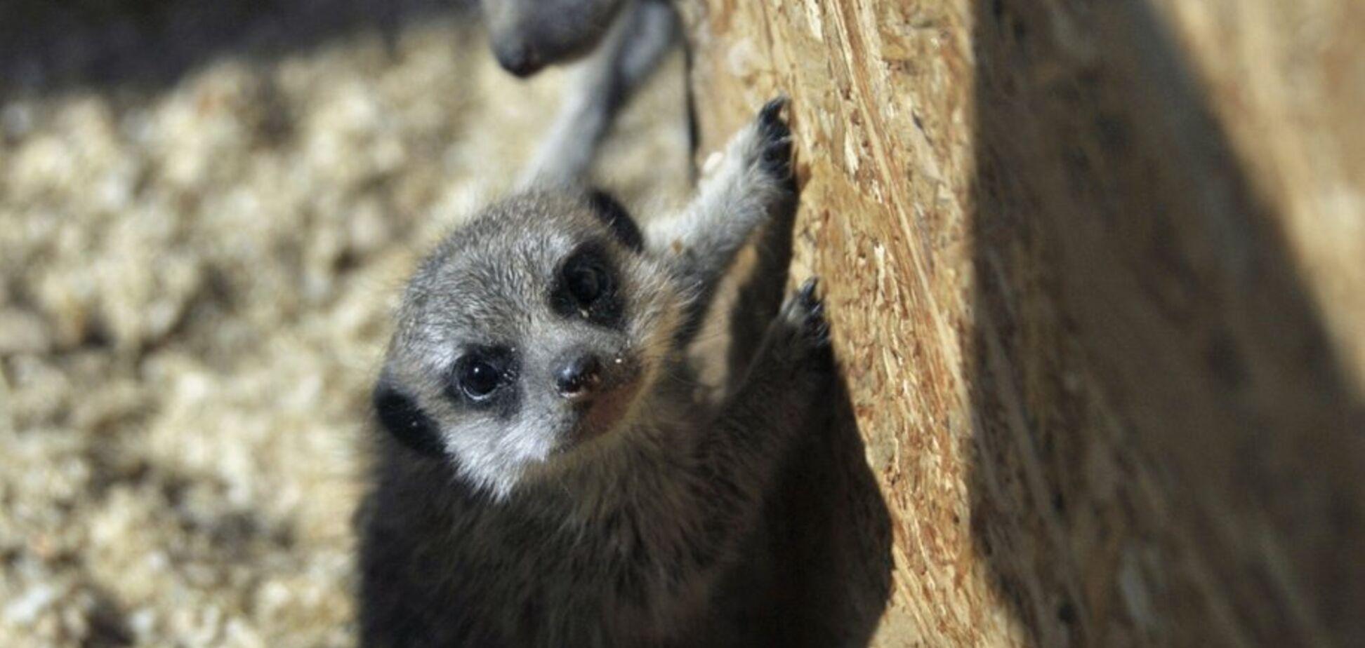 В украинском зоопарке родились экзотические зверьки: милые фото