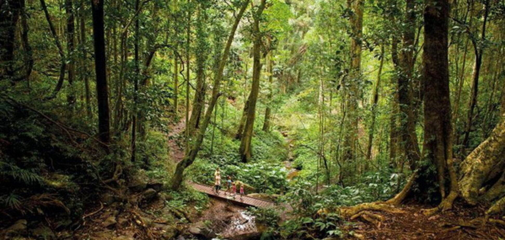 Поки в Україні вирубують ліси: в Австралії висадять мільярд дерев