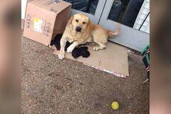 Новый Хатико: пес неделю ждал умершего хозяина под больницей