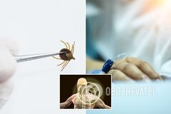 Украинцам грозят опасные насекомые: чем можно заболеть