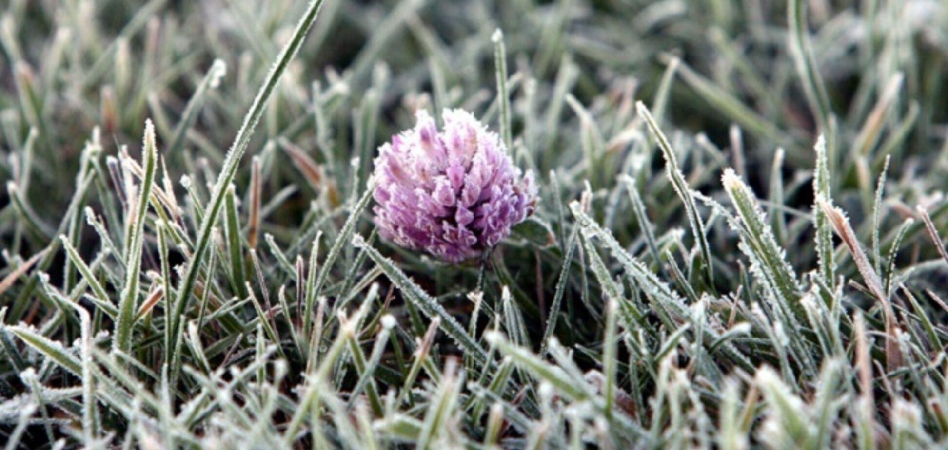 Україну накриють заморозки: синоптики попередили про погіршення погоди