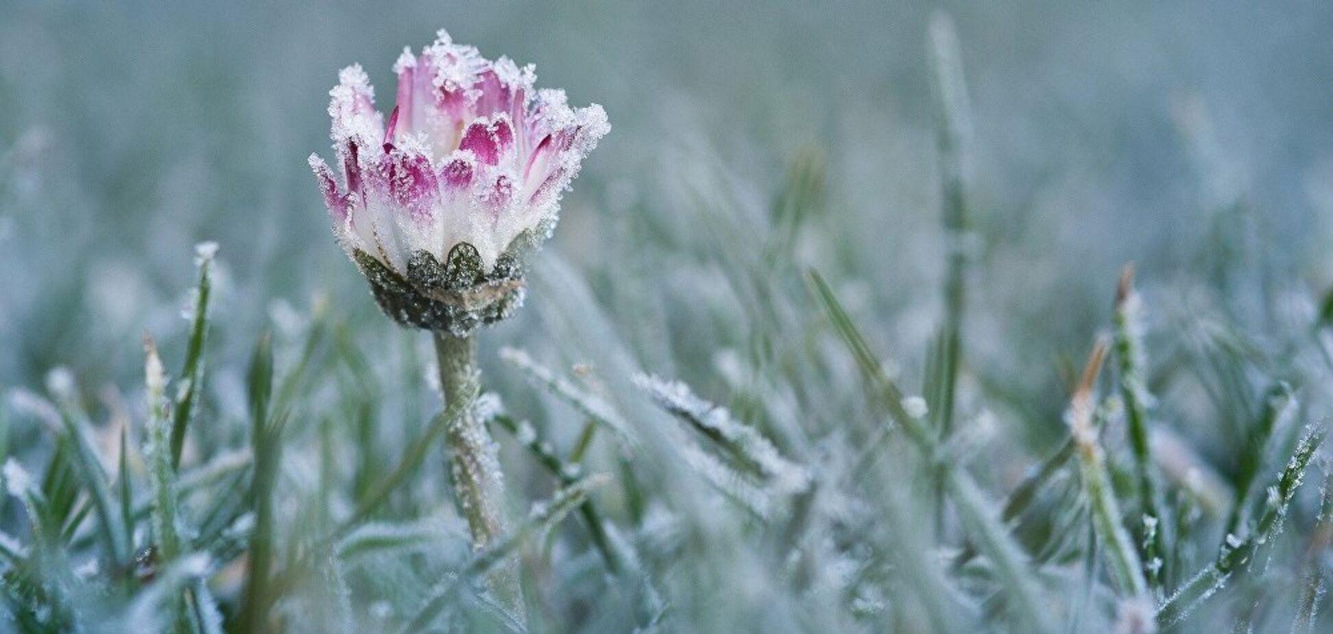 Від заморозків до +18: синоптики дали прогноз на початок тижня