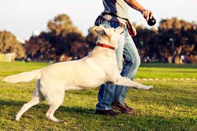 Собаки продлевают жизнь своим хозяевам: названо неожиданное объяснение