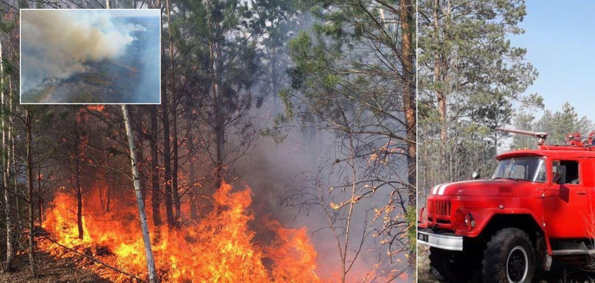 Масштабна пожежа з Білорусі перекинулася на територію України: всі подробиці, фото і відео