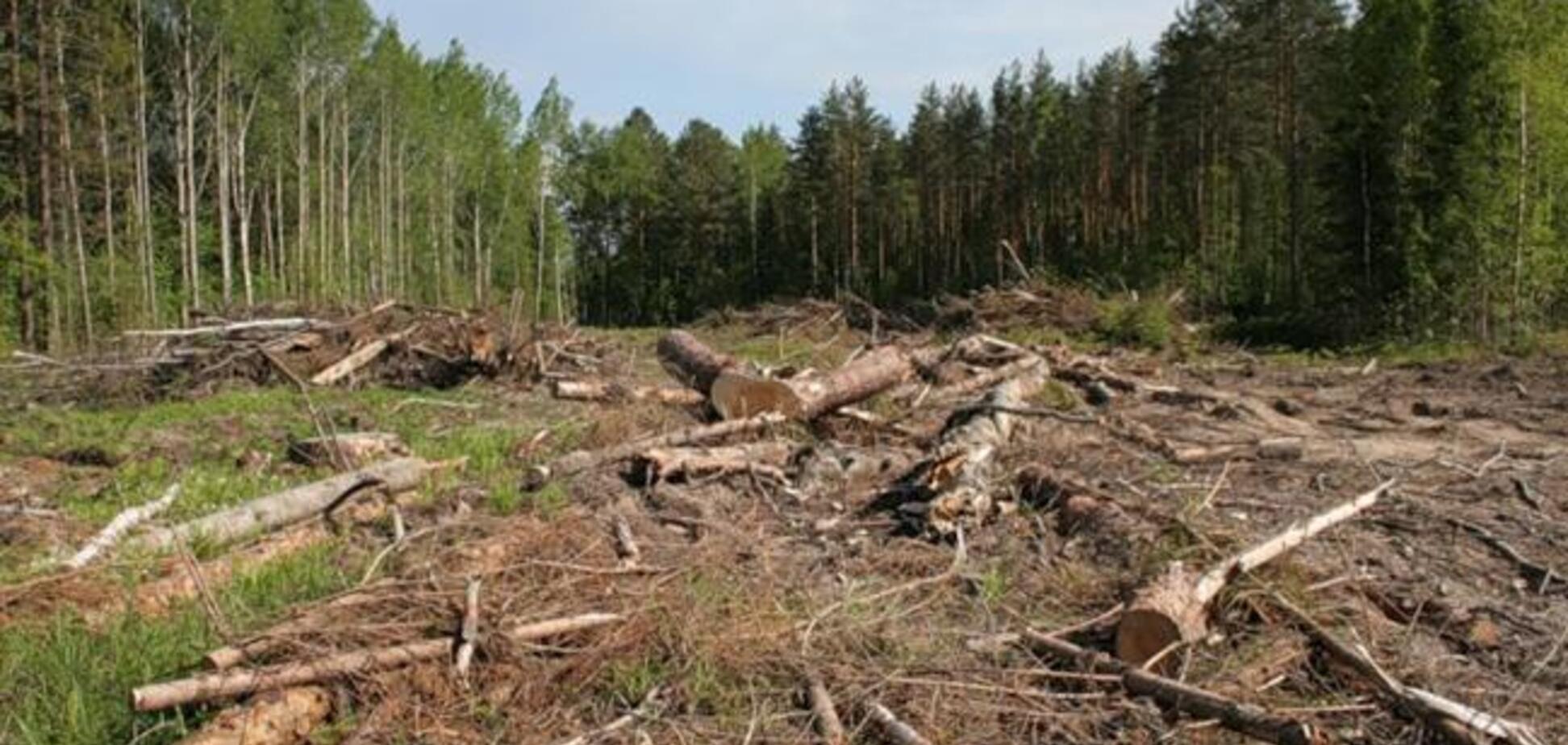 В Україні збільшили штрафи за вирубку лісів: що вирішила Рада