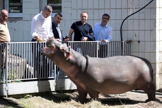 Кличко потішив мережу зворушливим відео з гіпопотамом