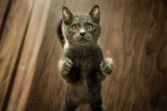 Японские ученые раскрыли необычный факт о кошках