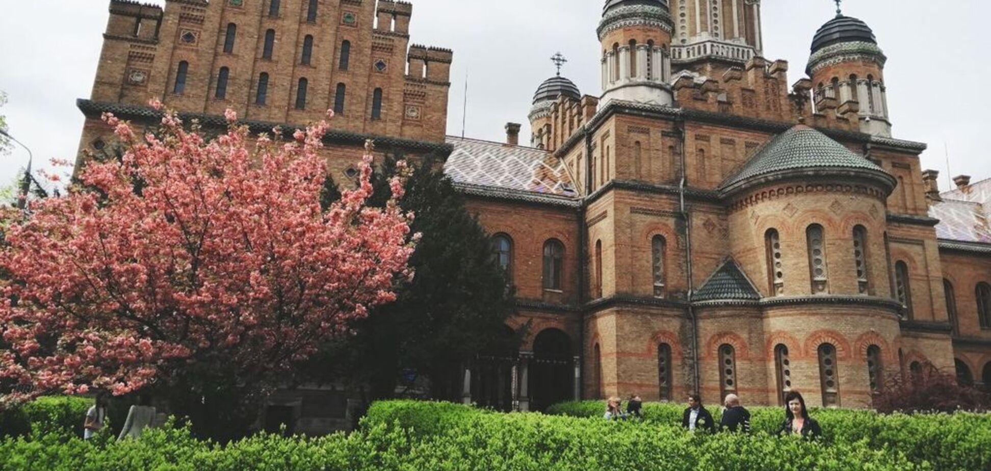 Цветущие сакуры и храмы: появились завораживающие фото весенних Черновцов