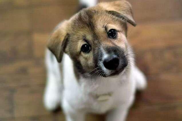 Турист подобрал бездомного щенка и жестко поплатился