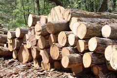 В Україні далі процвітає 'новітня лісова мафія'