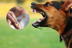Нападение собак