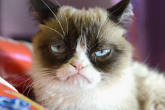 Grumpy Cat (Сердитый кот)
