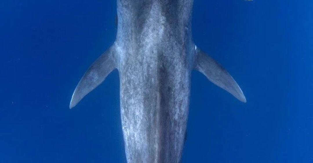 Знакомство драйвера с синим китом попало на потрясающие фото