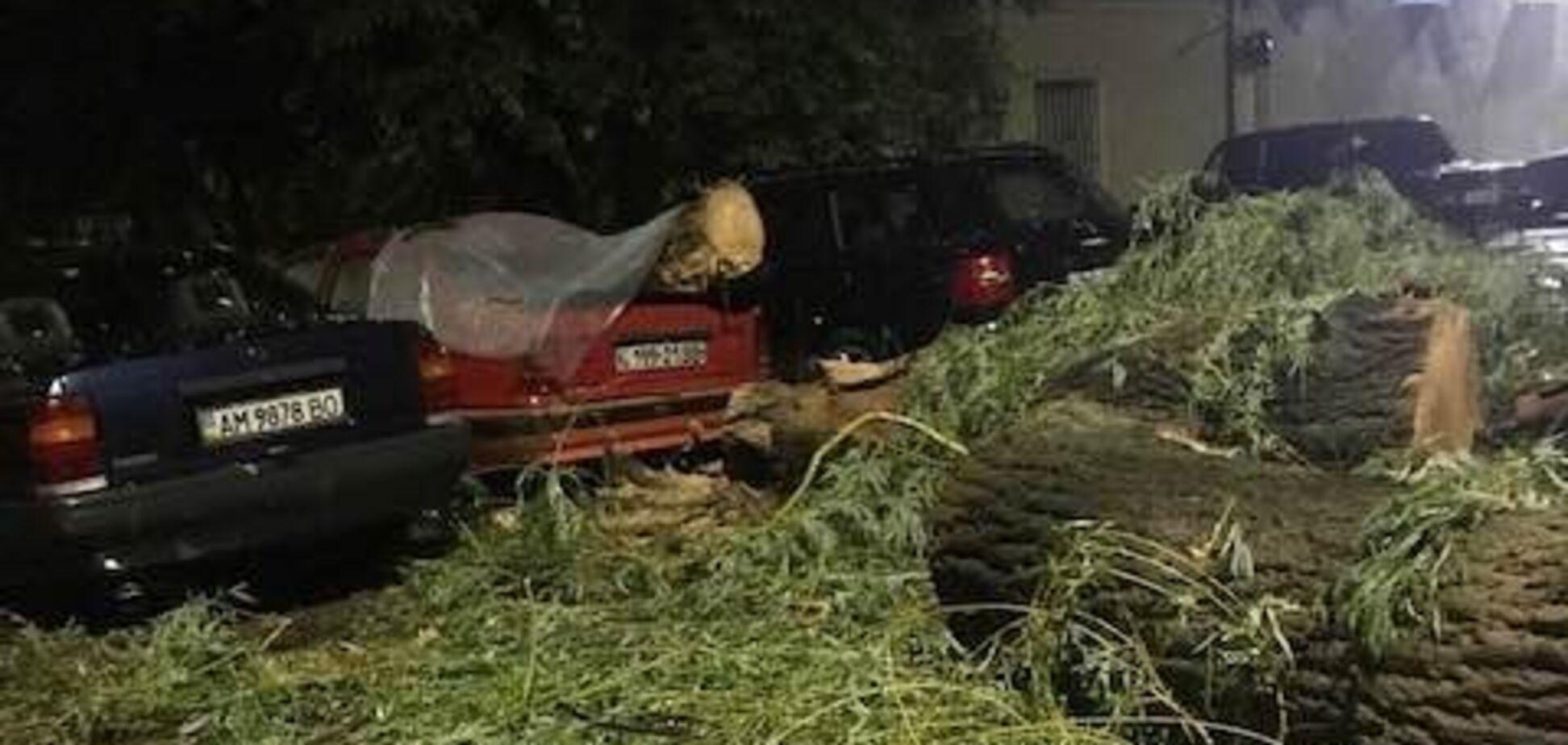 Дерева вирвало з коренем: Житомирщиною пронісся сильний ураган. Фото