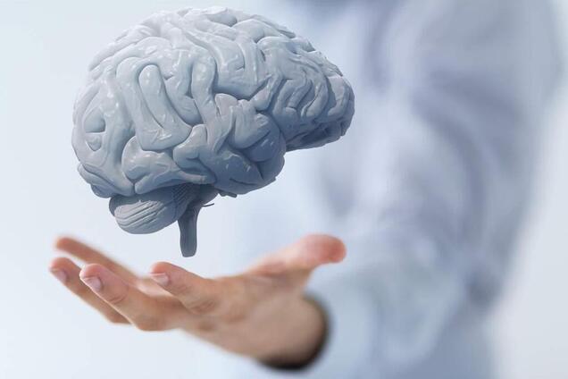 Как остановить старение мозга: назван лучший способ
