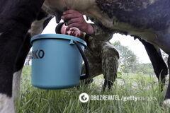 В молоке и мясе коров нашли угрозу смертельной болезни