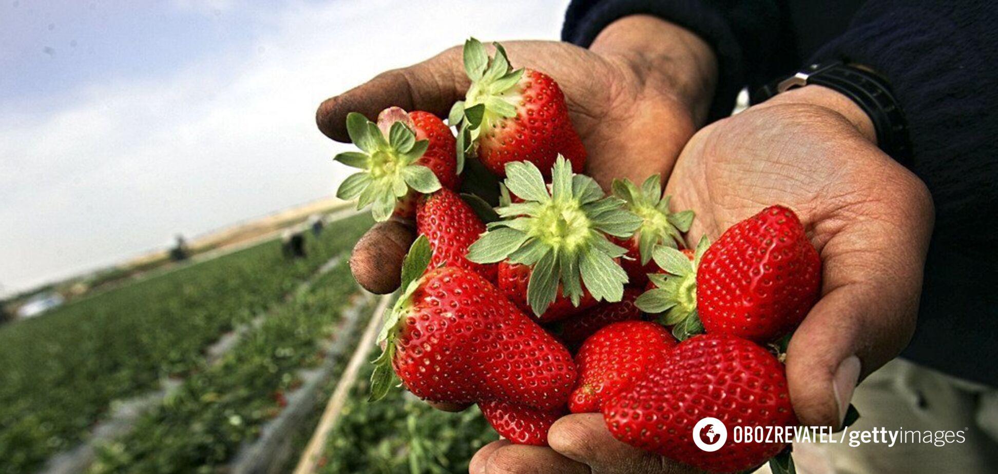 В Украине предрекли обвал цен на клубнику: когда ждать
