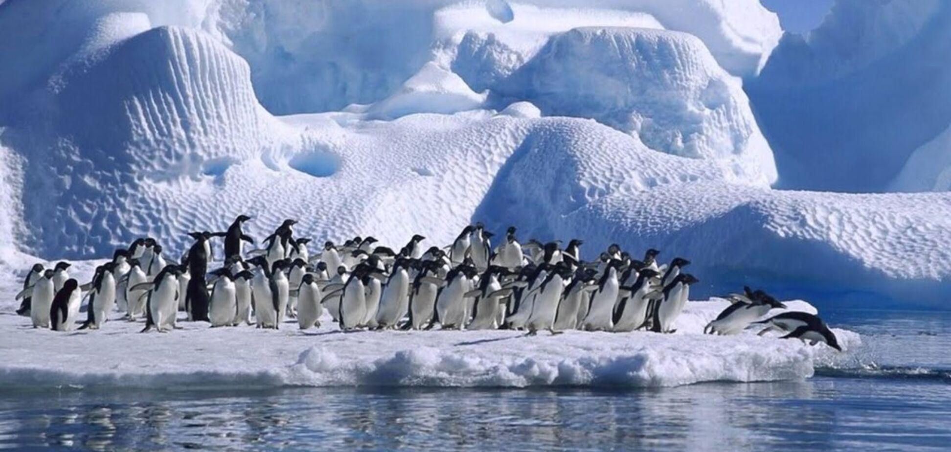 Світ лякають новим льодовиковим періодом: вчена дала прогноз