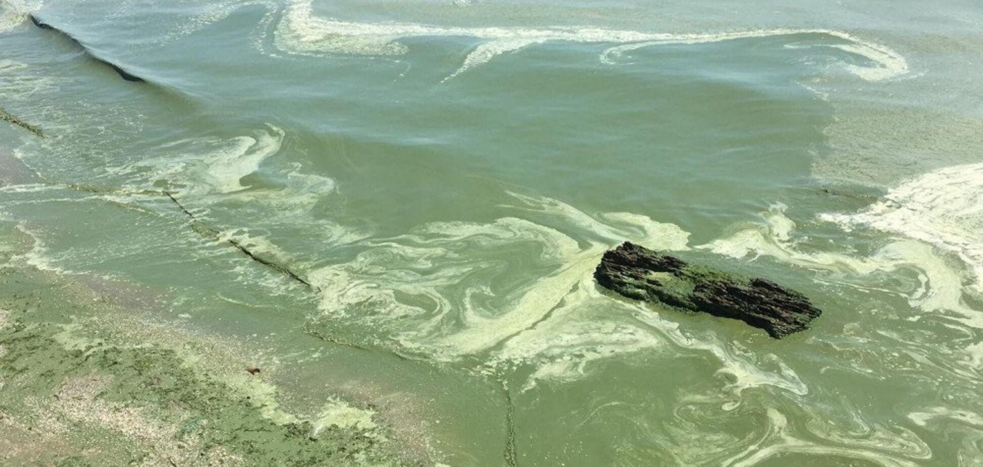 Море в Одессе позеленело от ядовитых веществ: чем это опасно для здоровья людей