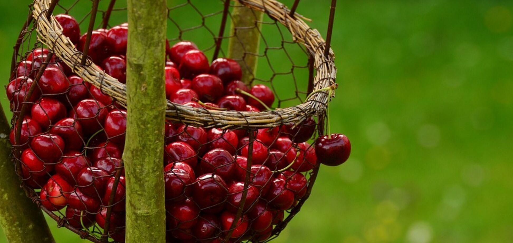 Не більше склянки на день: дієтолог попередила про особливість літньої ягоди