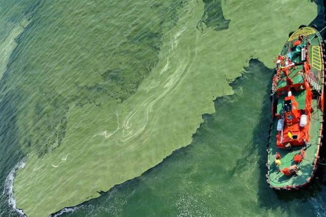 Зеленое море в Одессе: что происходит на курорте сейчас