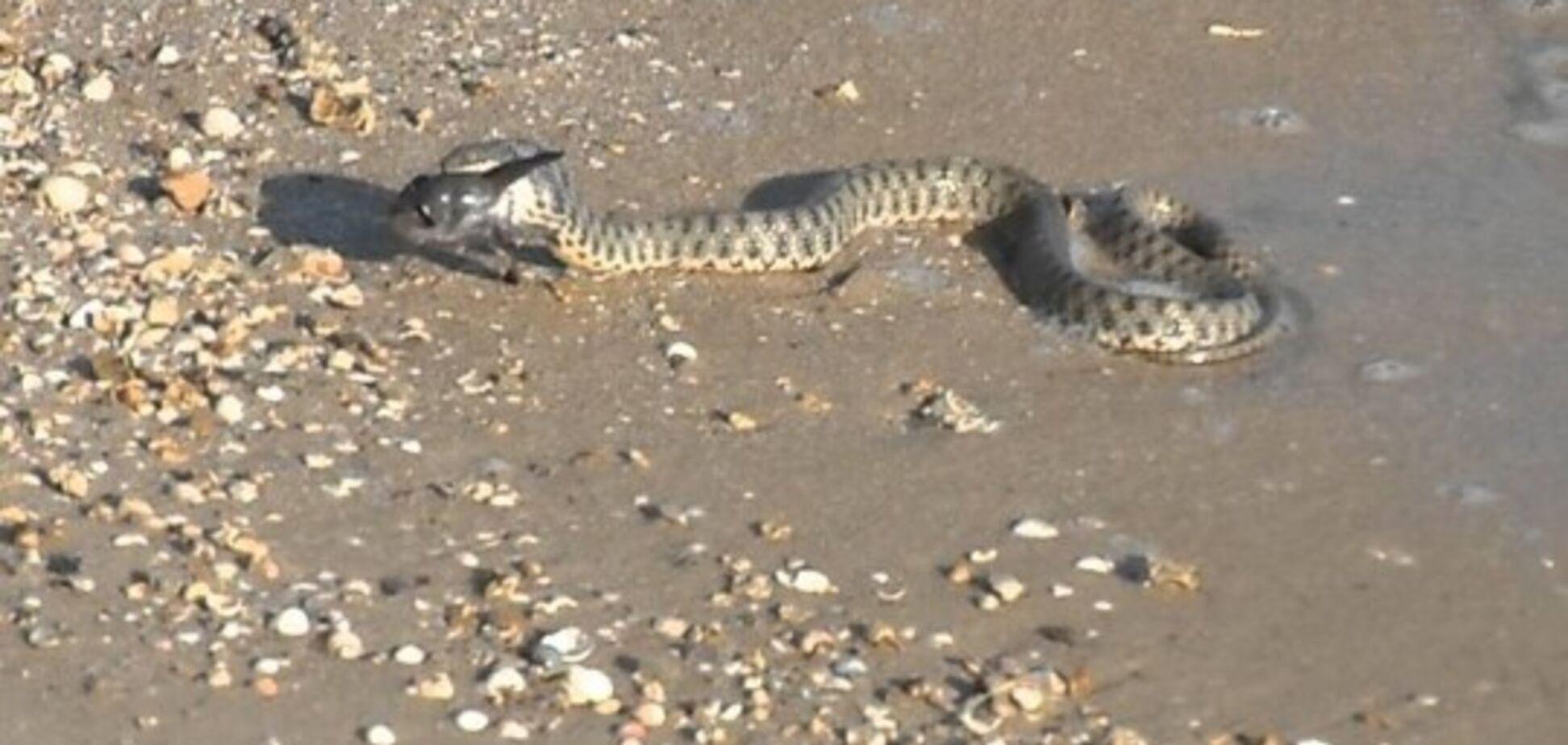 Змії в Одесі