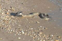 Змеи в Одессе