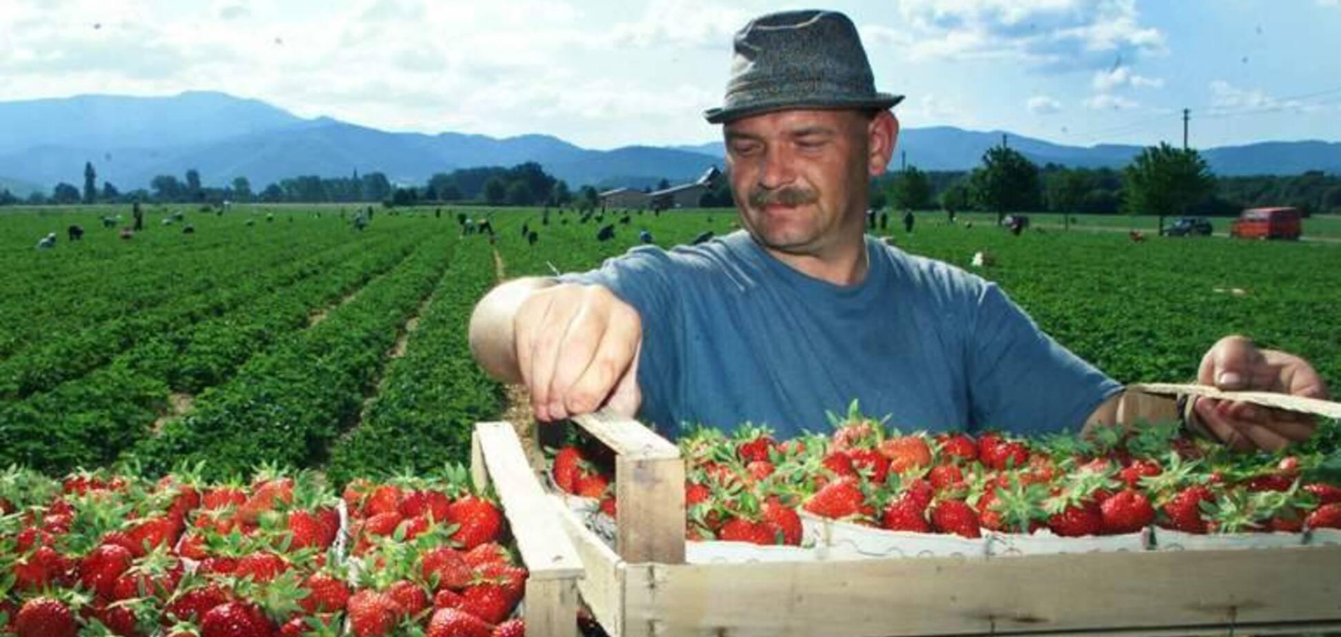 Хочуть виїхати далі: в Україні виникла нова проблема через заробітчан