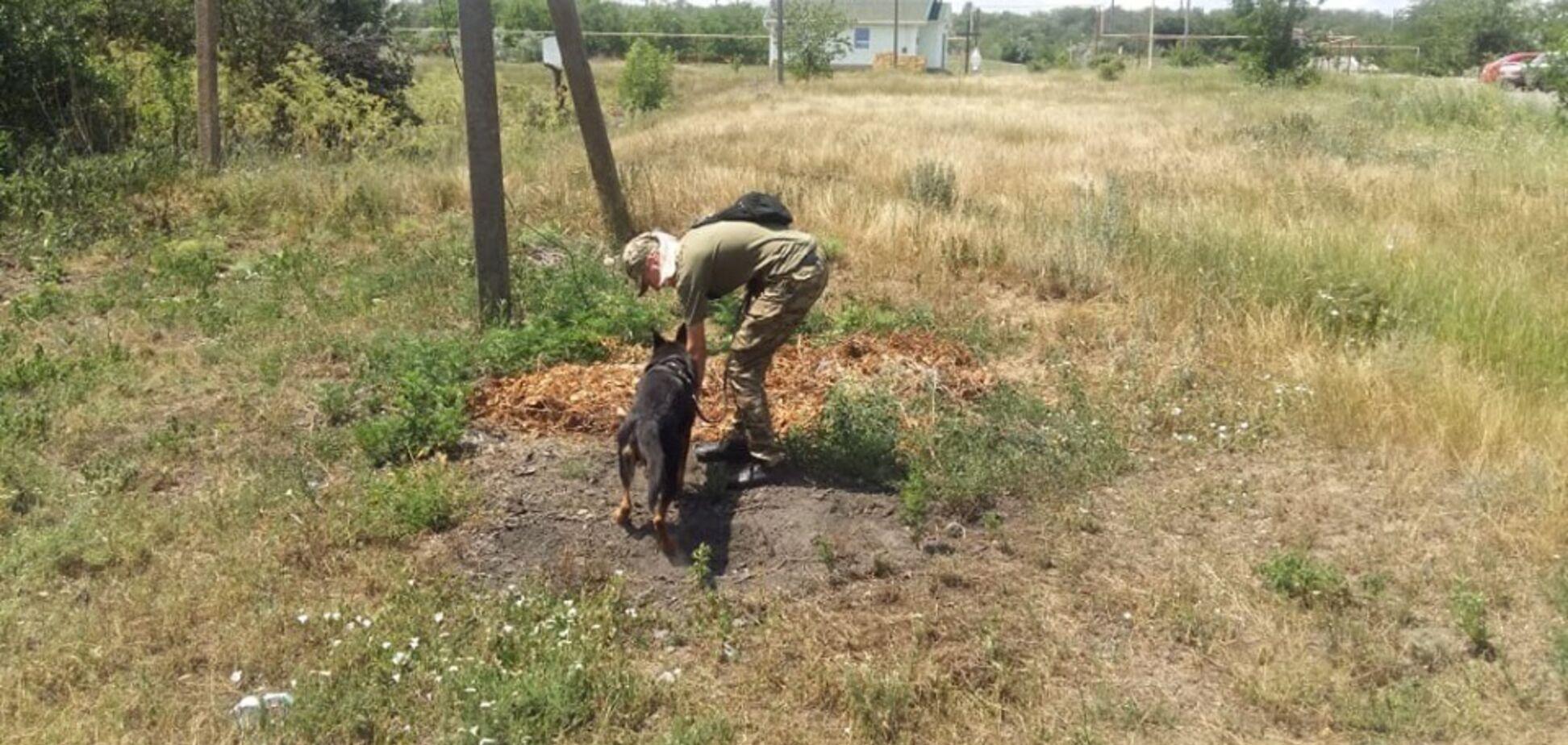 'Обучены на поиск трупов': в полиции сделали важное заявление о поисках девочки под Одессой