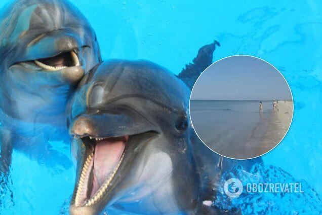 Дельфіни розважають туристів