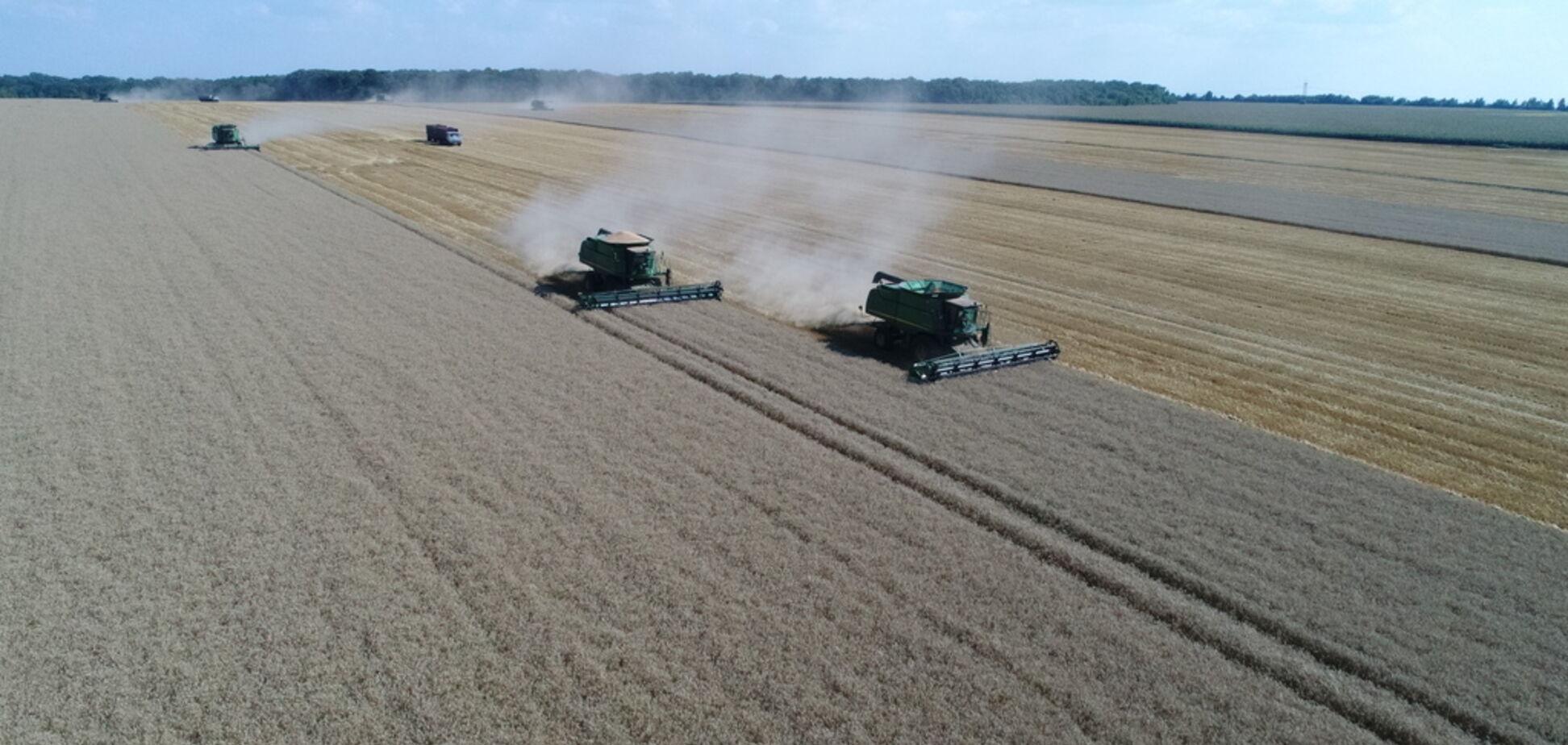 В 'Укрлендфарминге' Бахматюка спрогнозировали высокий урожай озимых зерновых