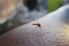 Кого чаще всего кусают комары: ученые дали ответ