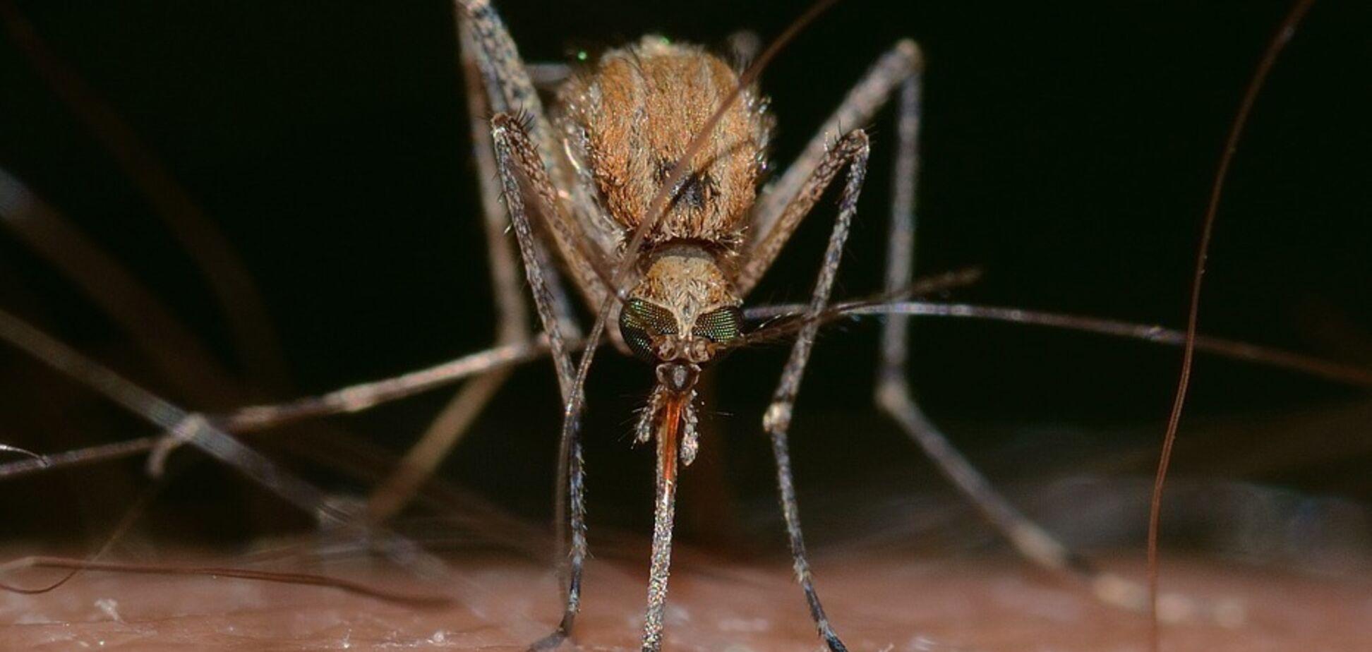 Кого, как и зачем кусают комары: эксперт ответил на наболевшие вопросы