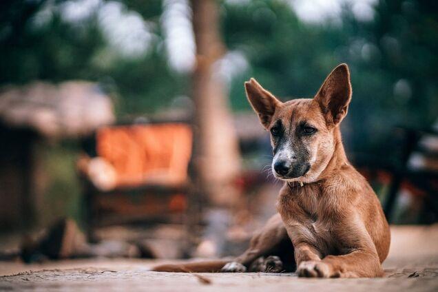 Ілюстрація. Безпритульний пес