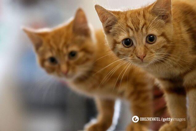 Ученые рассказали, от чего в доме может умереть кошка photo