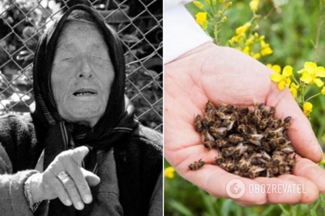 Ванга передбачила бджолиний мор