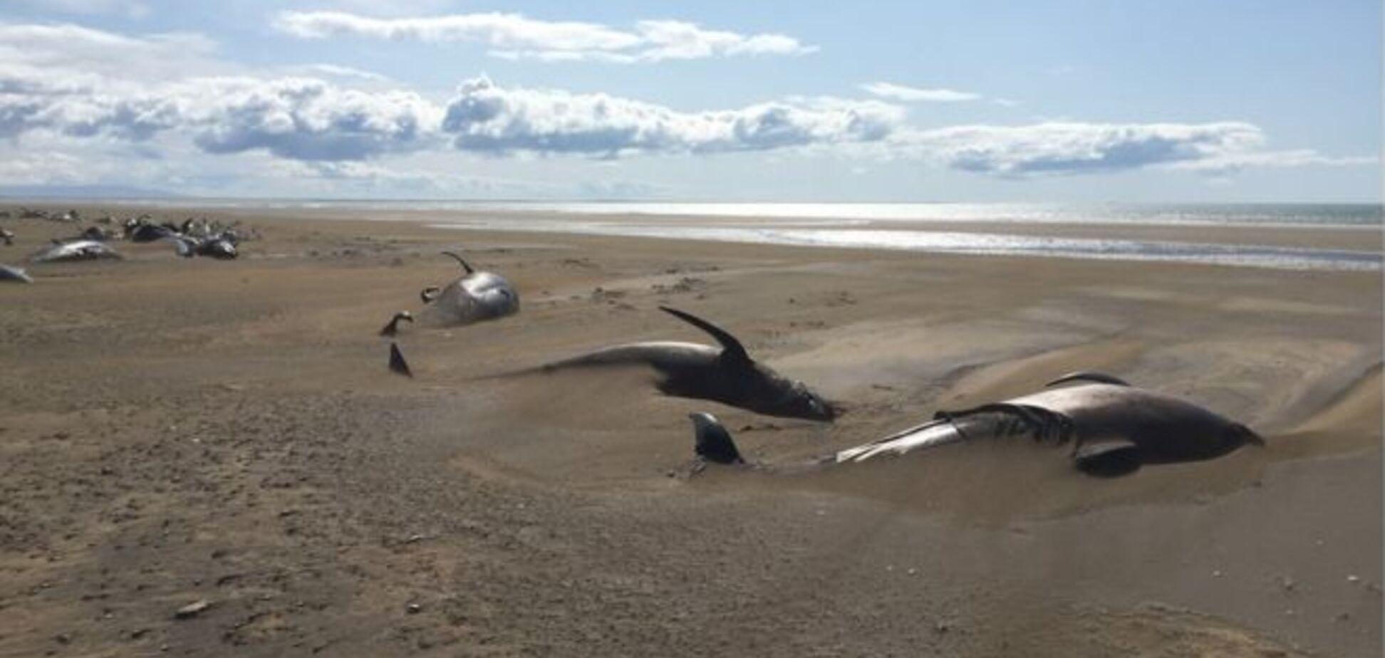 Мертві кити