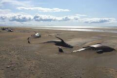 Мертвые киты