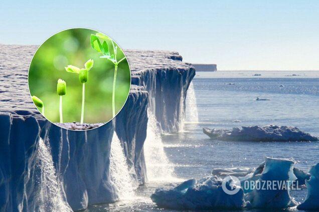 Использование биогаза поможет снизить выброс СО2 и улучшить экологию