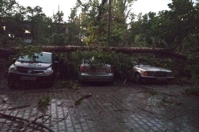 Дерево упало на 11 машин