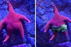 Морская звезда с 'упрогой попкой' стала вирусным мемом: лучшие фотожабы