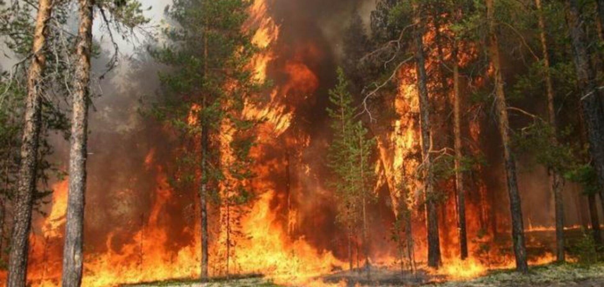 На Луганщине загорелся заминированный лес: есть пострадавший