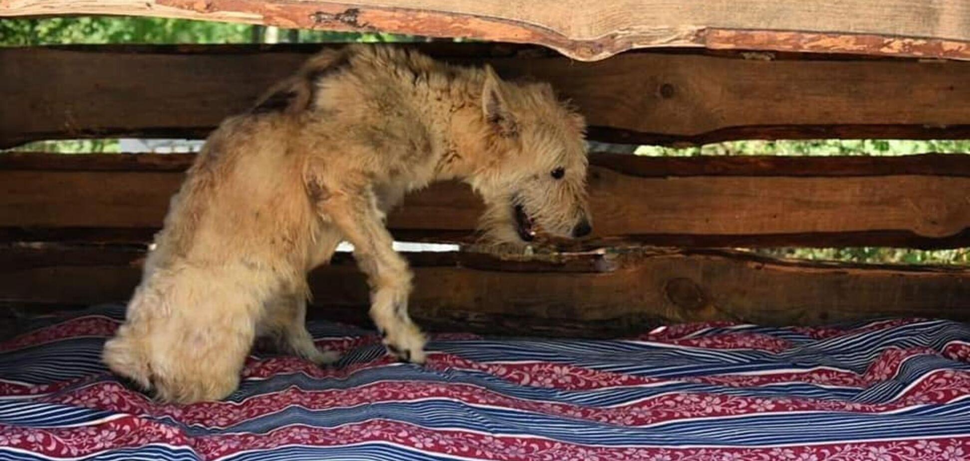 У Дніпрі відомий баскетболіст проводить аукціон в допомогу собакам-інвалідам