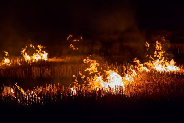 В Днепре горело поле
