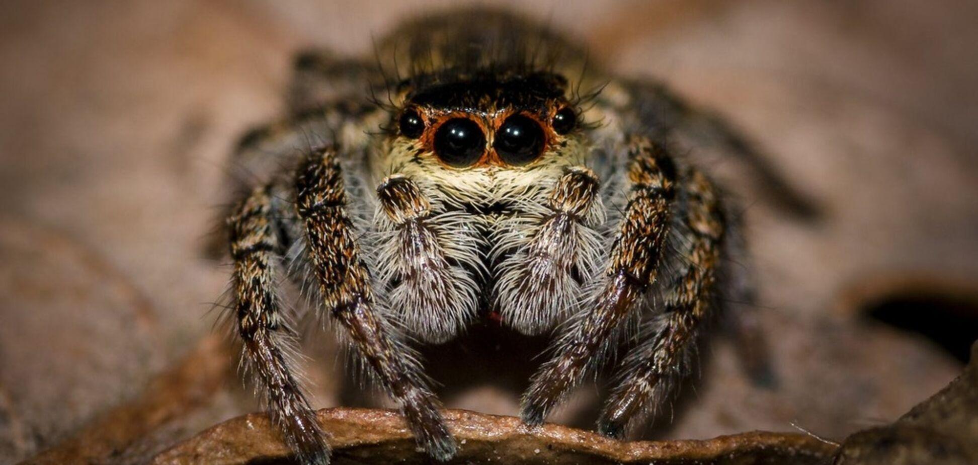 У Запоріжжі помітили небезпечного отруйного павука: фото