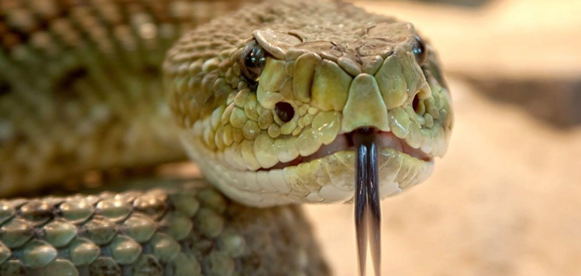 Напугала до смерти: под Днепром змея заползла в туалет частного дома. Фото