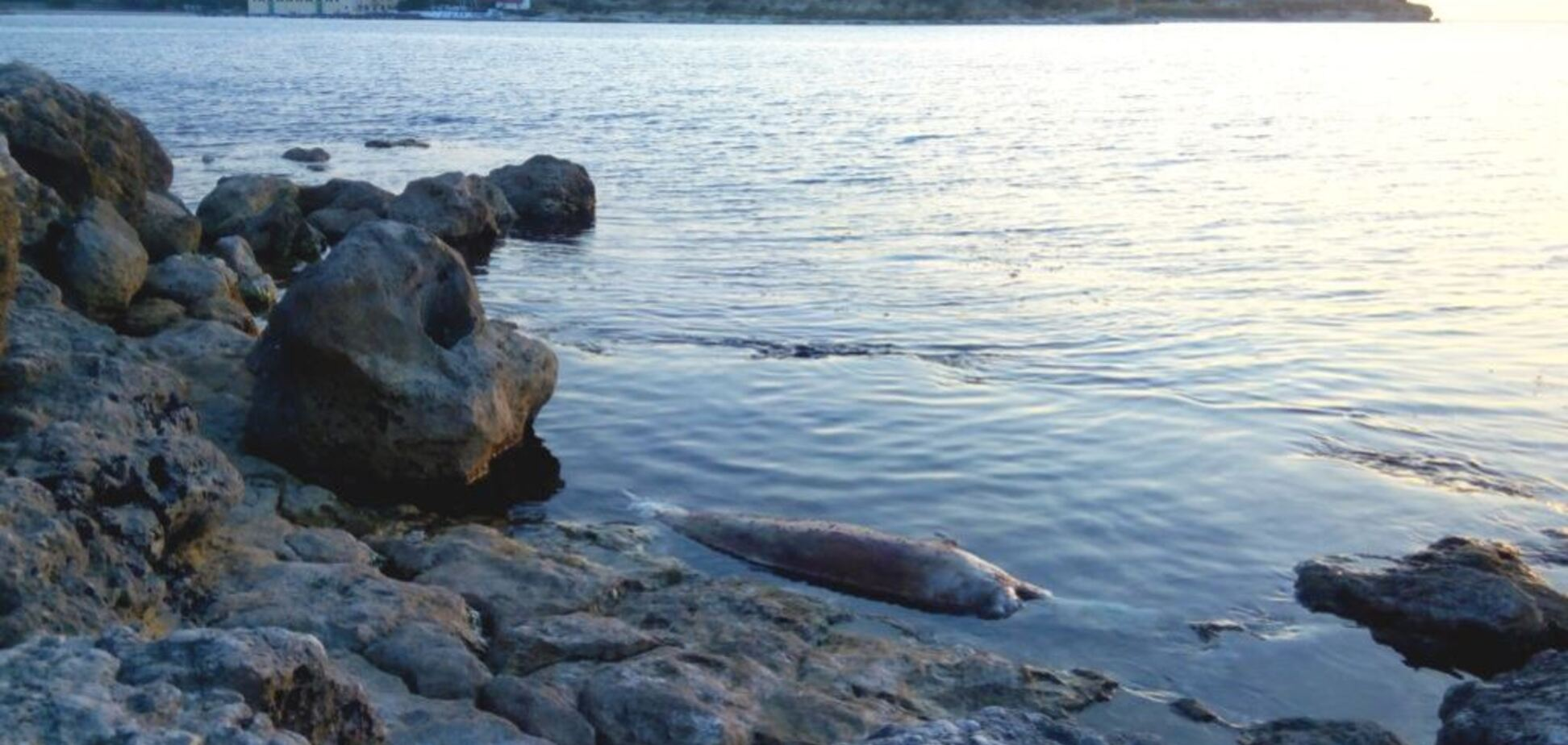 Новая катастрофа? В Крыму на берег массово выбросились дельфины
