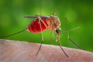 Проникает в тело: в Днепре обнаружили опасное заболевание после укуса комара