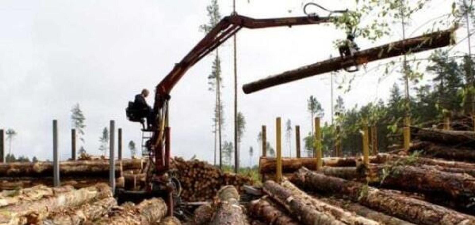 У Зеленського прояснили, що буде з мораторієм на експорт лісу