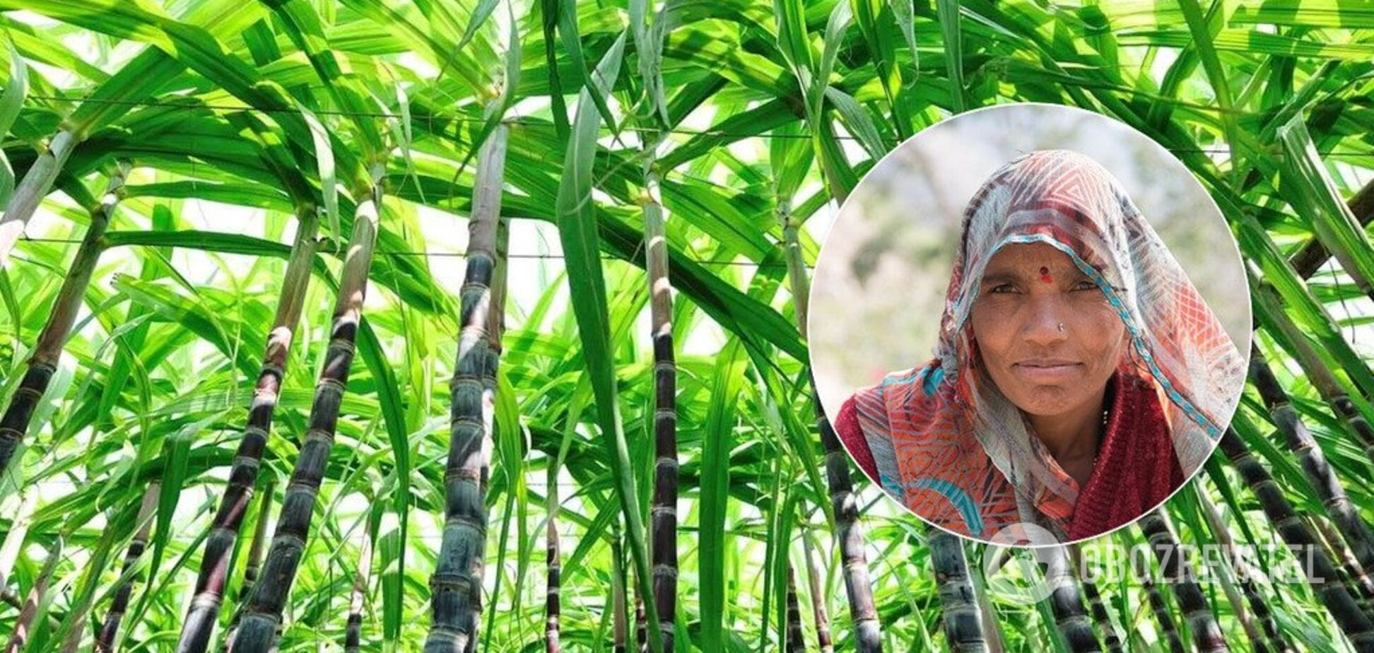 'Удаляли матку!' Стало известно о 'пытках' над работающими женщинами в Индии